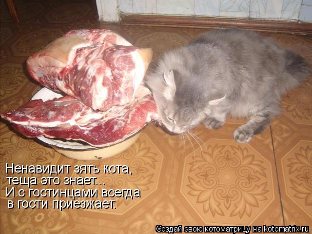 Котоматрица: Ненавидит зять кота, теща это знает... И с гостинцами всегда в гости приезжает.
