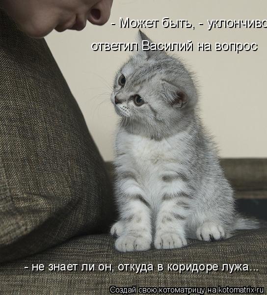 Котоматрица: - Может быть, - уклончиво  ответил Василий на вопрос  - не знает ли он, откуда в коридоре лужа...