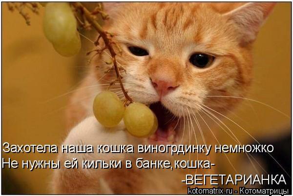 Котоматрица: Захотела наша кошка виногрдинку немножко Не нужны ей кильки в банке,кошка- -ВЕГЕТАРИАНКА