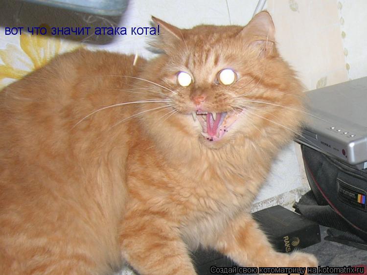 Котоматрица: вот что значит атака кота!