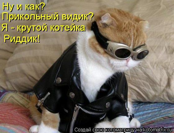 Котоматрица: Ну и как? Прикольный видик? Я - крутой котейка Риддик!