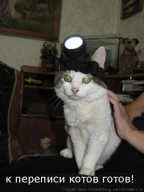 Котоматрица: к переписи котов готов!