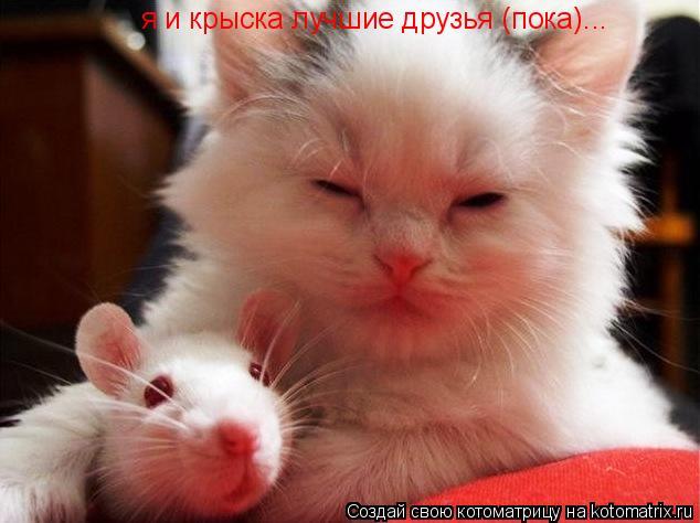 Котоматрица: я и крыска лучшие друзья (пока)...