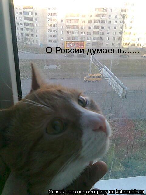 Котоматрица: О России думаешь......