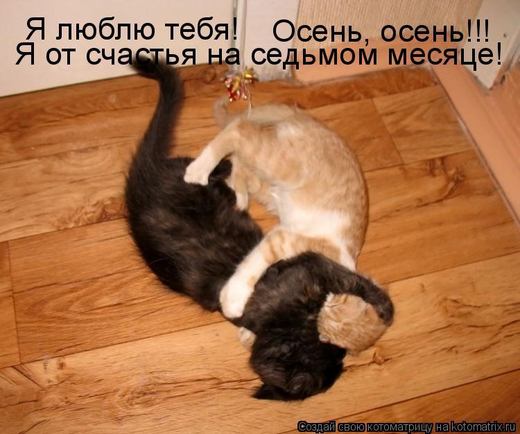 Котоматрица: Я люблю тебя! Осень, осень!!! Я от счастья на седьмом месяце!