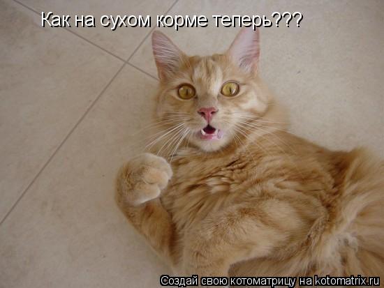 Котоматрица: Как на сухом корме теперь???