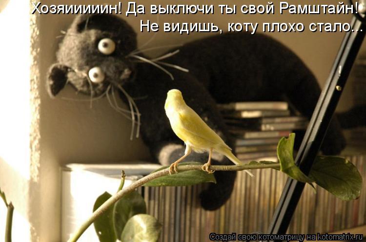 Котоматрица: Хозяииииин! Да выключи ты свой Рамштайн!  Не видишь, коту плохо стало...