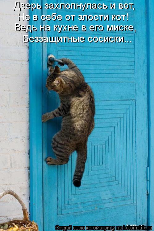 Котоматрица: Дверь захлопнулась и вот, Не в себе от злости кот! Ведь на кухне в его миске, Беззащитные сосиски...