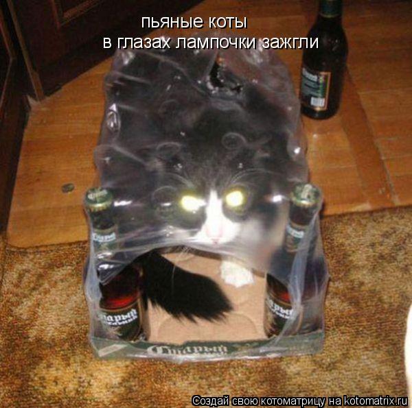 Котоматрица: пьяные коты в глазах лампочки зажгли
