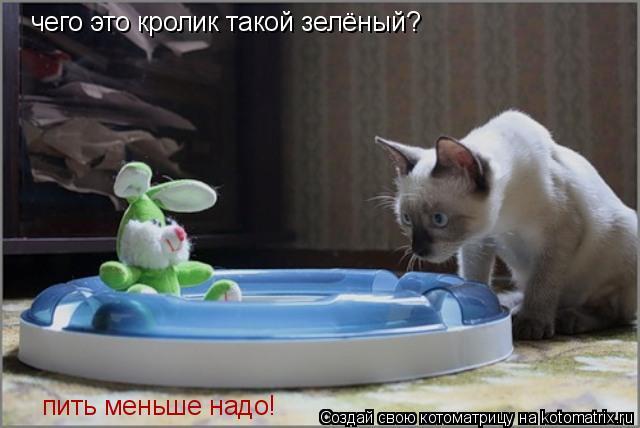 Котоматрица: чего это кролик такой зелёный? чего это кролик такой зелёный? чего это кролик такой зелёный? пить меньше надо!