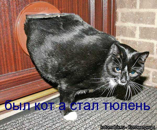 Котоматрица: был кот а стал тюлень