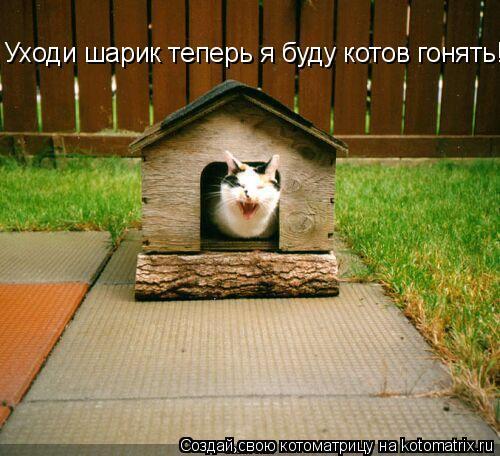 Котоматрица: Уходи шарик теперь я буду котов гонять!