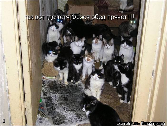 Котоматрица: так вот где тетя Фрося обед прячет!!!!