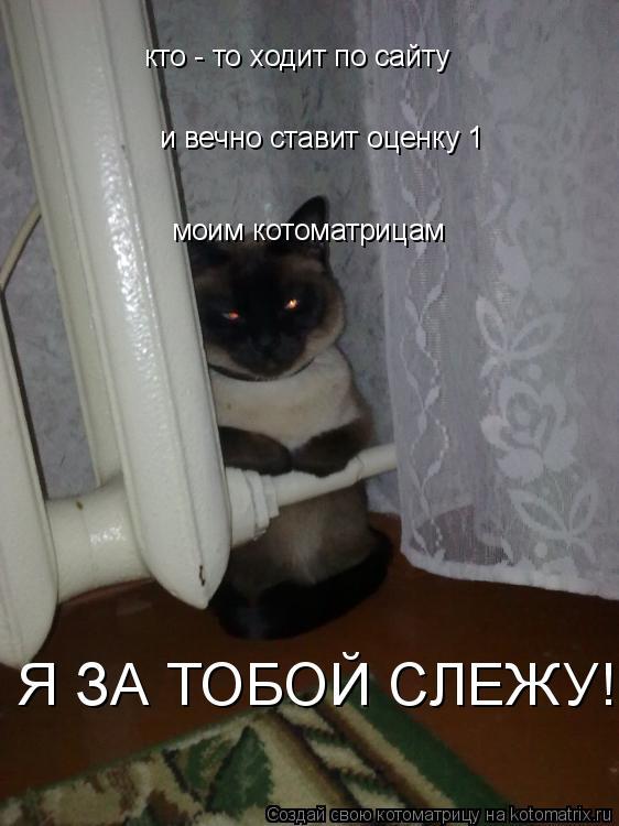 Котоматрица: кто - то ходит по сайту и вечно ставит оценку 1  моим котоматрицам Я ЗА ТОБОЙ СЛЕЖУ!!!!!