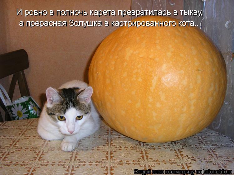 Котоматрица: И ровно в полночь карета превратилась в тыкву, а прерасная Золушка в кастрированного кота...