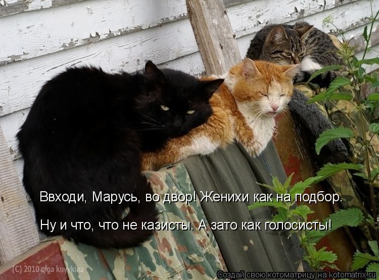 Котоматрица: Ввходи, Марусь, во двор! Женихи как на подбор.  Ну и что, что не казисты. А зато как голосисты!