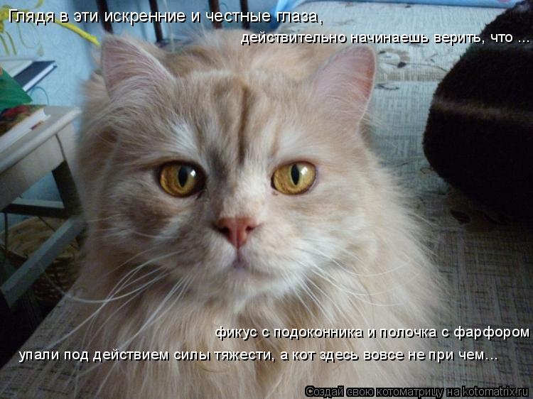 Котоматрица: Глядя в эти искренние и честные глаза,  упали под действием силы тяжести, а кот здесь вовсе не при чем... фикус с подоконника и полочка с фарфо