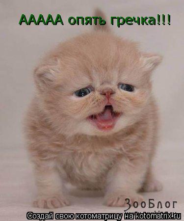 Котоматрица: ААААА опять гречка!!!
