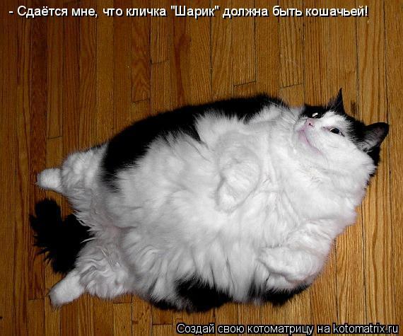 """Котоматрица - - Сдаётся мне, что кличка  """"Шарик """" должна быть кошачьей!"""