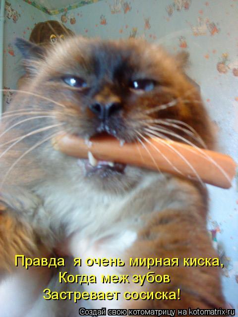 Котоматрица: Правда  я очень мирная киска,    Когда меж зубов    Застревает сосиска!