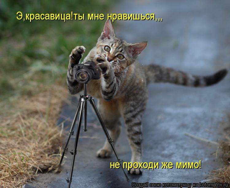 Котоматрица: Э,красавица!ты мне нравишься,,, не проходи же мимо!