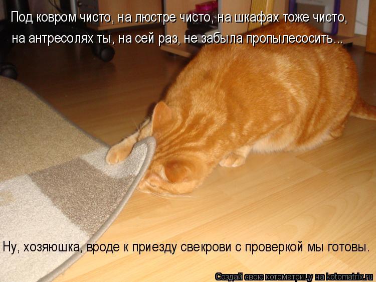 Под ковром чисто, на люстре чисто, на шкафах тоже чисто, на антресолях