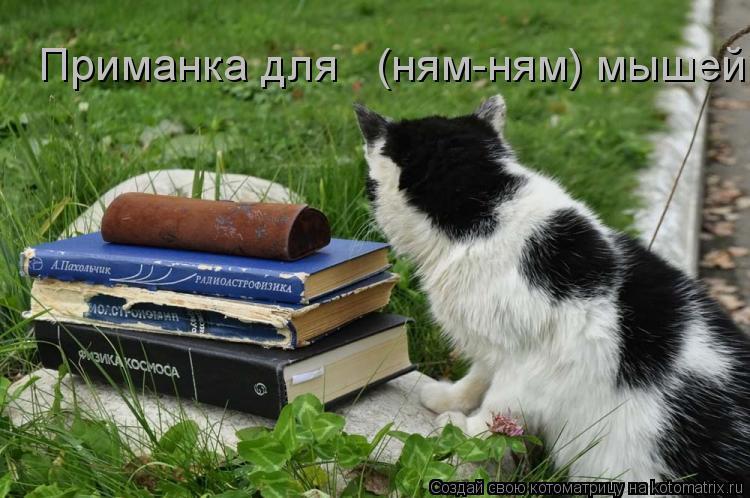 Котоматрица: Приманка для   (ням-ням) мышей