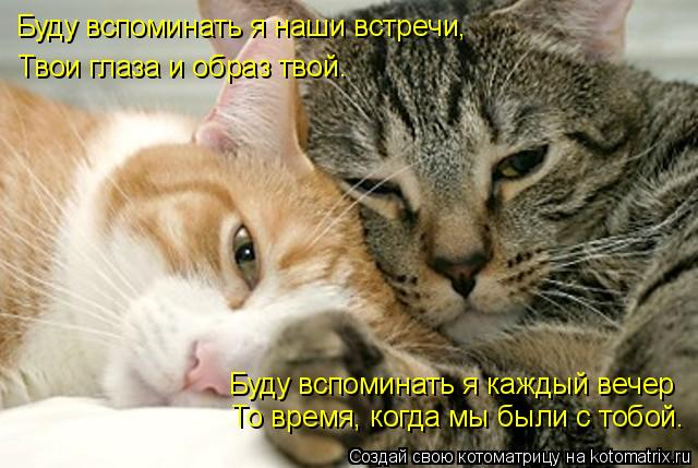Котоматрица: Буду вспоминать я каждый вечер То время, когда мы были с тобой.  Буду вспоминать я наши встречи, Твои глаза и образ твой.