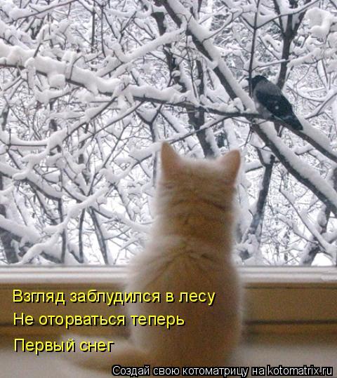 Котоматрица: Взгляд заблудился в лесу Не оторваться теперь Первый снег