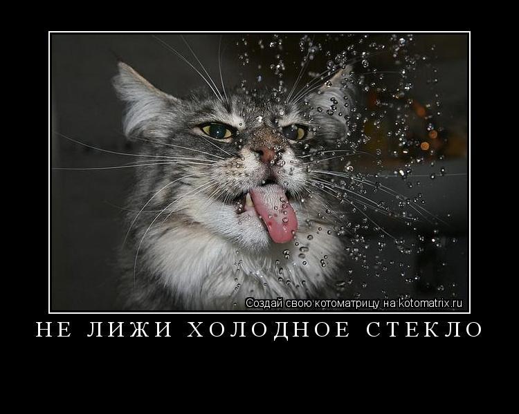 Котоматрица: не лижи холодное стекло