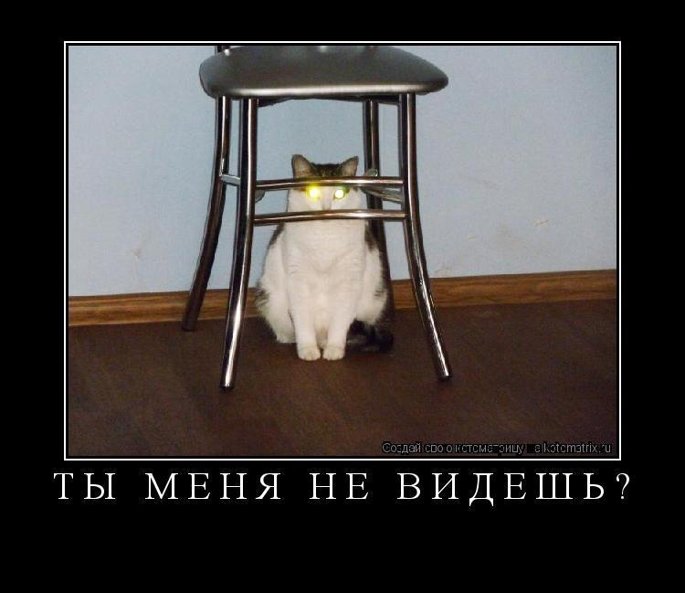 Котоматрица: ты меня не видешь?
