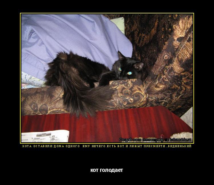 Котоматрица: кота оставили дома одного  ему нечего есть вот и лежыт присмерти ,бедненький кот голодает