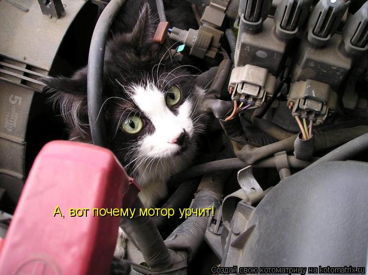 Котоматрица: А, вот почему мотор урчит!