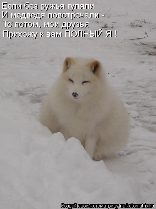 Котоматрица: Если без ружья гуляли И медведя повстречали - То потом, мои друзья Прихожу к вам ПОЛНЫЙ Я !
