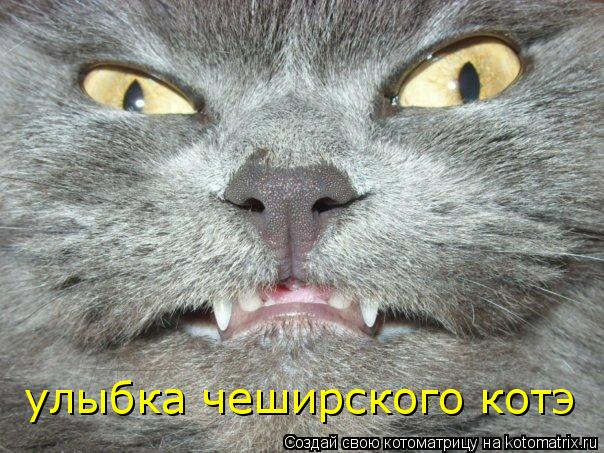 Котоматрица: улыбка чеширского котэ