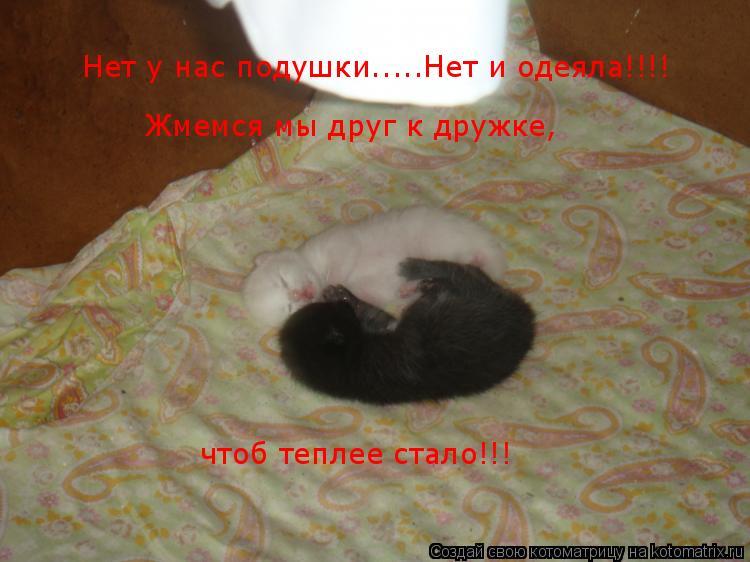Котоматрица: Нет у нас подушки.....Нет и одеяла!!!!   Жмемся мы друг к дружке, чтоб теплее стало!!!