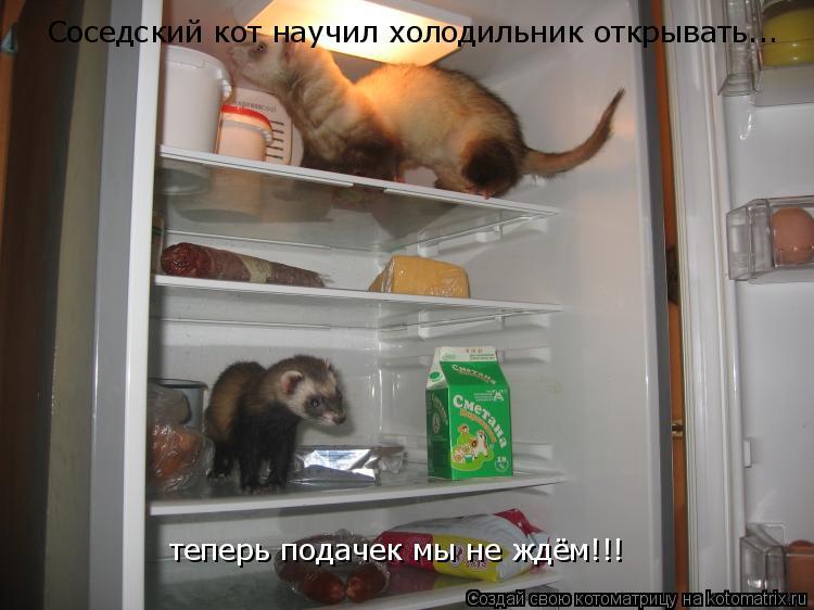 Котоматрица: Соседский кот научил холодильник открывать... теперь подачек мы не ждём!!!