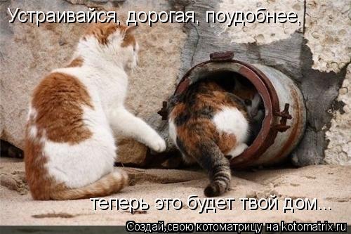 Котоматрица: Устраивайся, дорогая, поудобнее, Устраивайся, дорогая, поудобнее, теперь это будет твой дом...