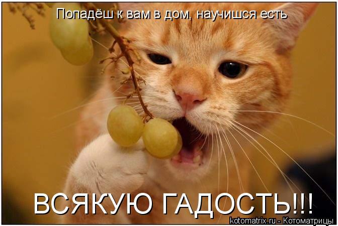 Котоматрица: Попадёш к вам в дом, научишся есть ВСЯКУЮ ГАДОСТЬ!!!