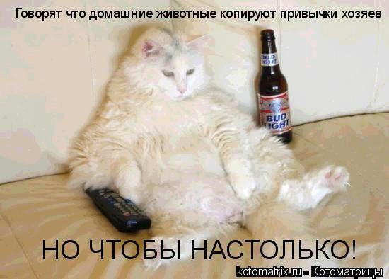 Котоматрица: Говорят что домашние животные копируют привычки хозяев НО ЧТОБЫ НАСТОЛЬКО!