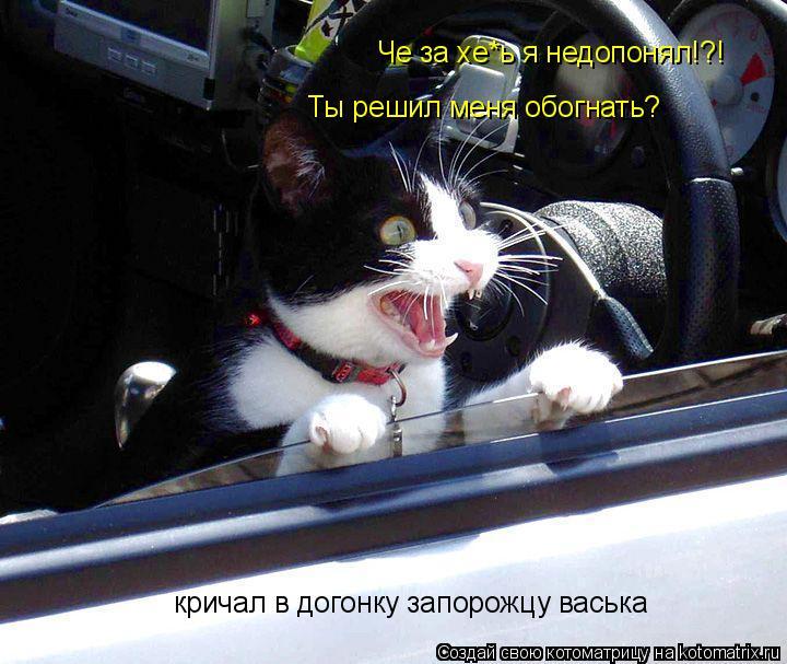 Котоматрица: Че за хе*ь я недопонял!?! Ты решил меня обогнать? кричал в догонку запорожцу васька