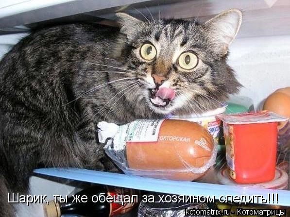 Котоматрица: Шарик, ты же обещал за хозяином следить!!!
