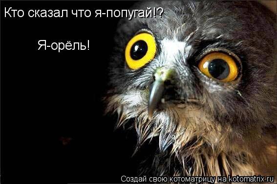 Котоматрица: Кто сказал что я-попугай!? Я-орёль!