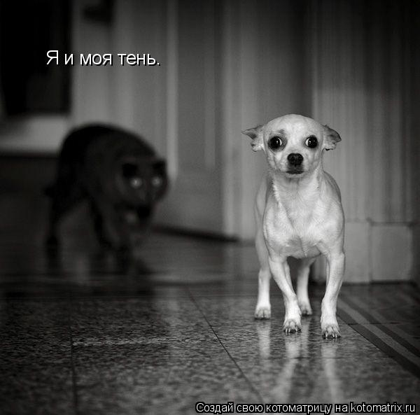 Котоматрица: Я и моя тень.