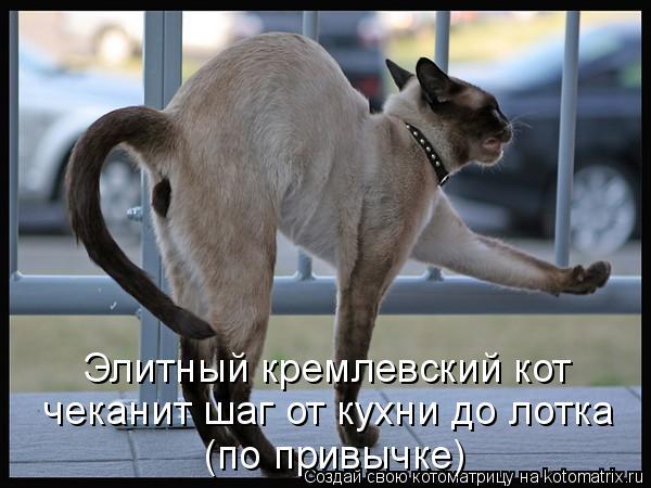 Котоматрица: Элитный кремлевский кот чеканит шаг от кухни до лотка (по привычке)
