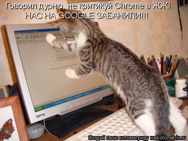 Котоматрица: Говорил дурню, не критикуй Chrome в ЖЖ! НАС НА GOOGLE ЗАБАНИЛИ!!!