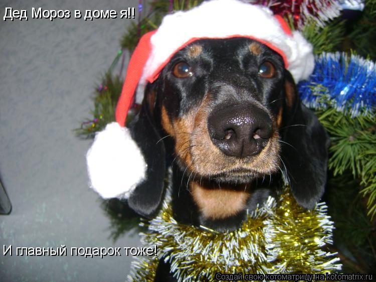Котоматрица: Дед Мороз в доме я!! Дед Мороз в доме я!! И главный подарок тоже!