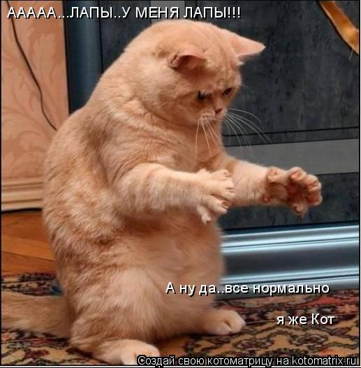 Котоматрица: ААААА...ЛАПЫ..У МЕНЯ ЛАПЫ!!! А ну да..все нормально я же Кот