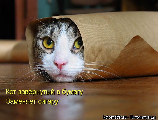 Котоматрица: Кот завёрнутый в бумагу  Заменяет сигару