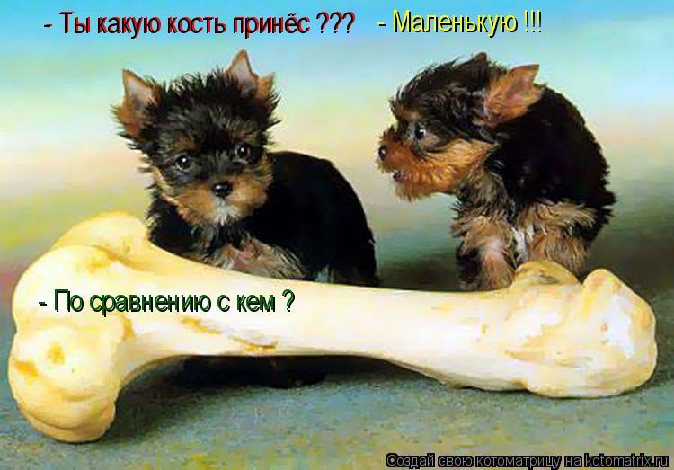 Котоматрица: - Ты какую кость принёс ???  - Ты какую кость принёс ???  - Маленькую !!! - По сравнению с кем ?